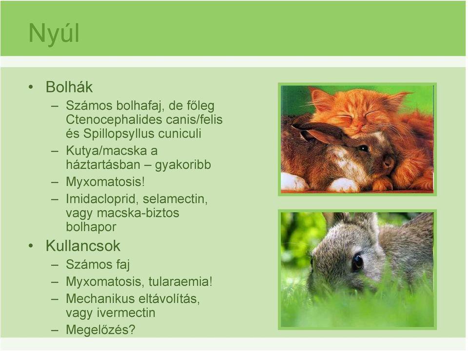 gyakori ektoparaziták nagy állatokban)