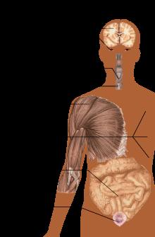 széles szalaggal történő betegség kezelése