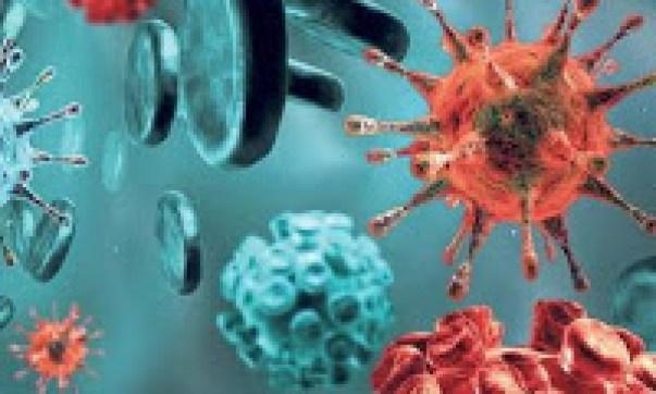 Parazita elleni készítmények - Gazdagréti Gyógyszertár - drotosvizsla.hu - WebPatika