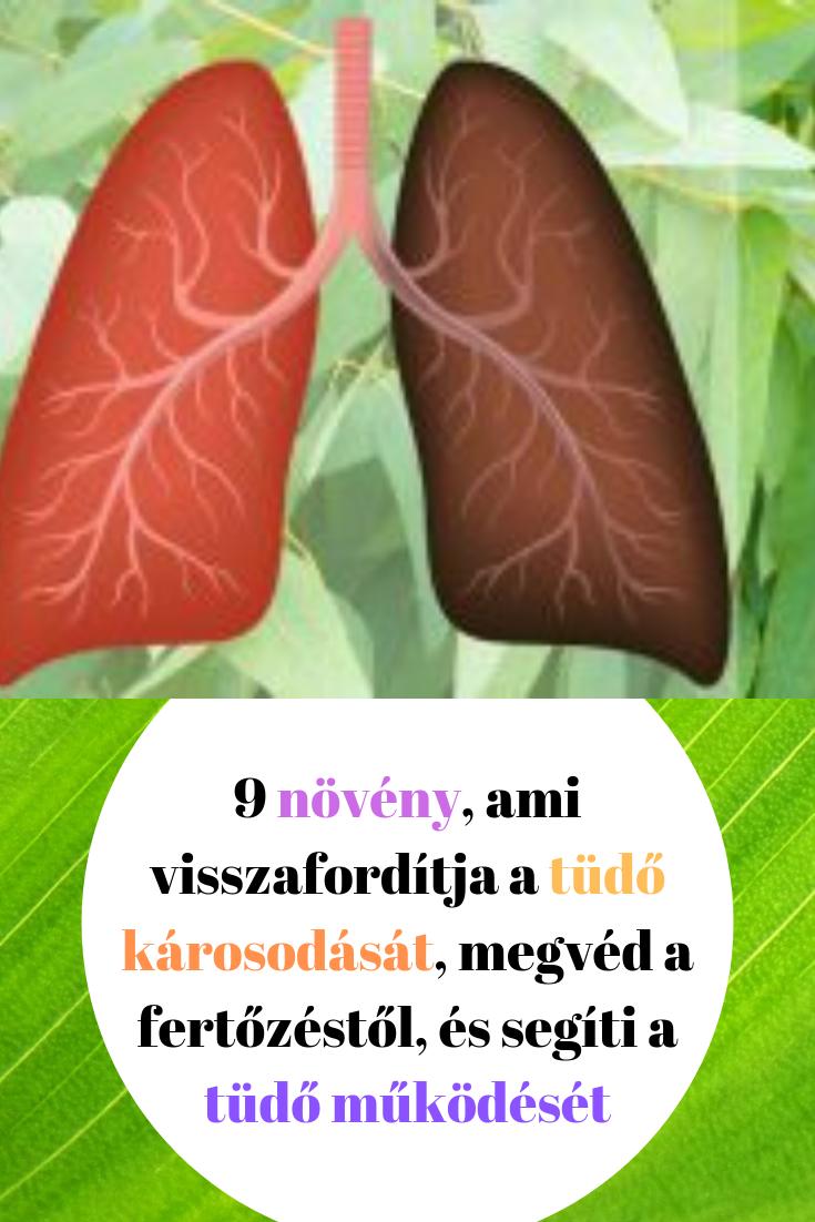 Hogyan határozható meg a giardiasis elemzése ,gyógynövények ital férgek