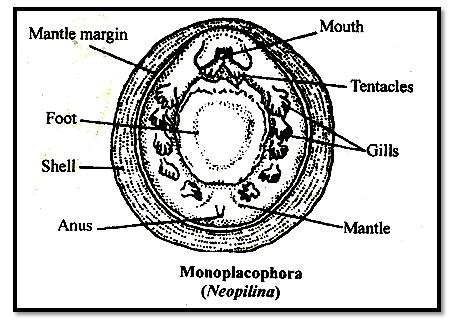 aschelminthes kép)