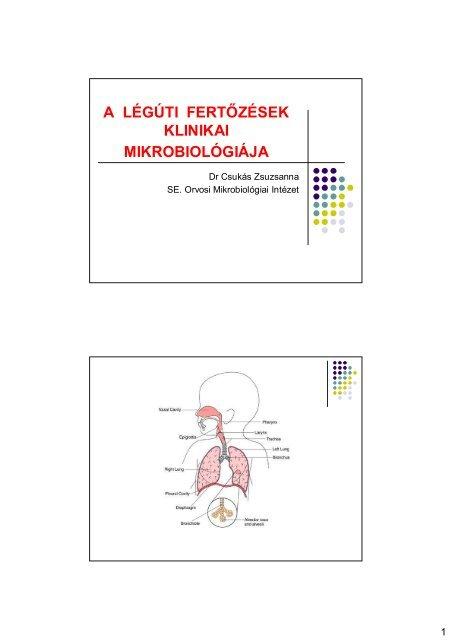 Vírusos emésztőrendszeri fertőzések - Solutix Boulardii