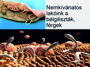 a férgek paraziták