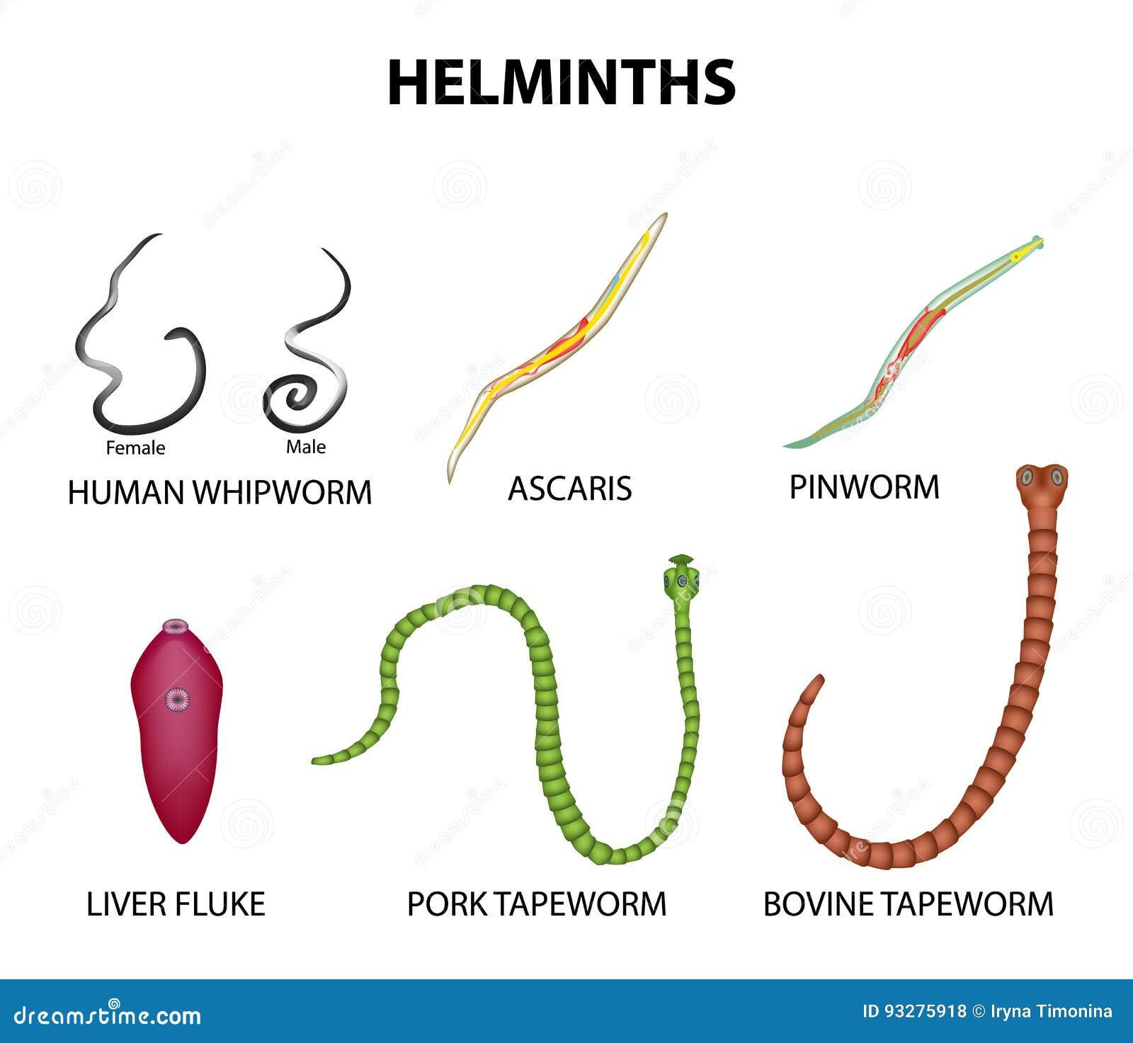 aszcariasis biohelminthiasis)