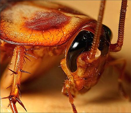 milyen tablettákat kell inni a paraziták ellen amelyből a férgek viszketnek