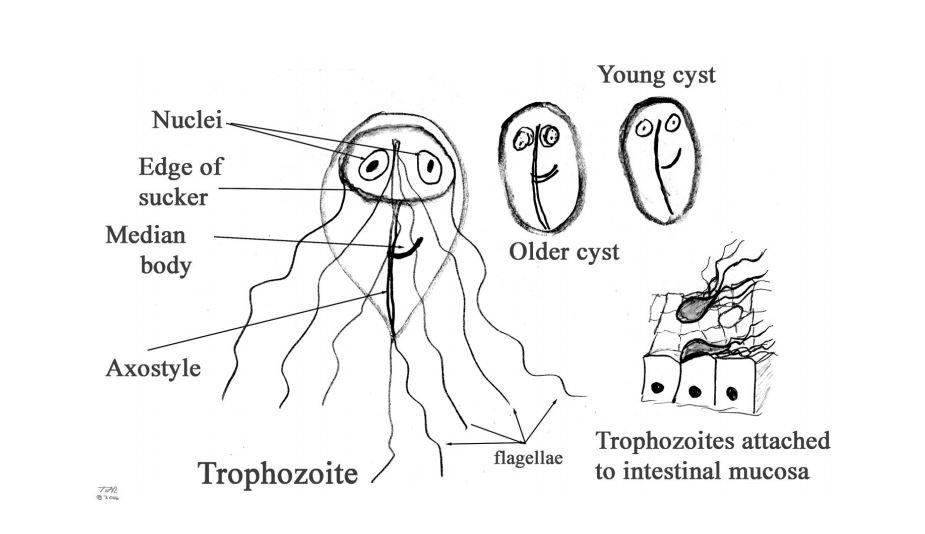 giardia worms)