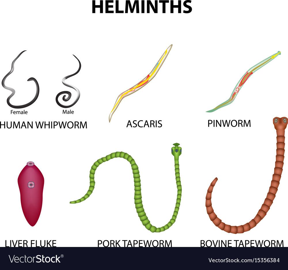 helminth pinworm kezelés)