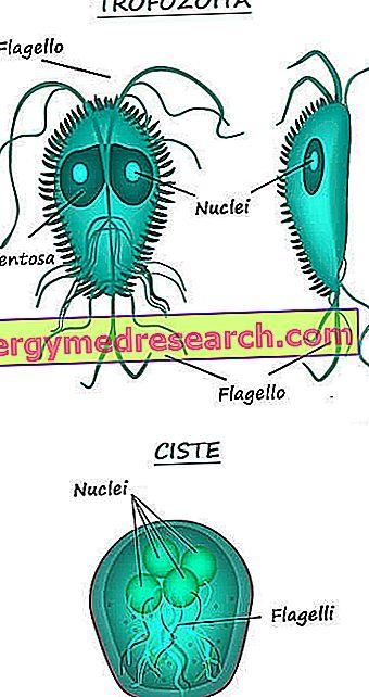 mik a giardiasis tünetei?