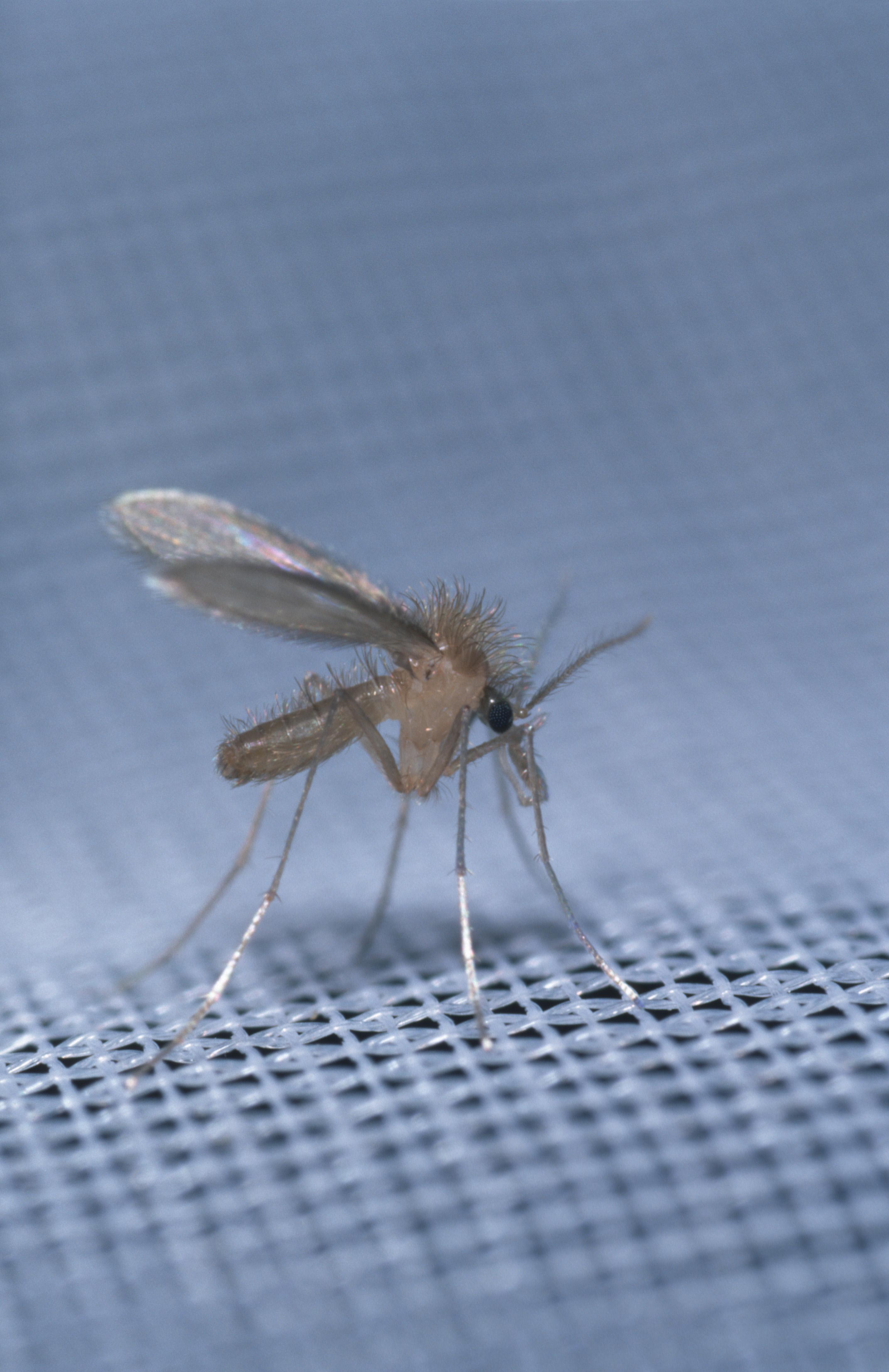 paraziták kezelése emberben orvosi