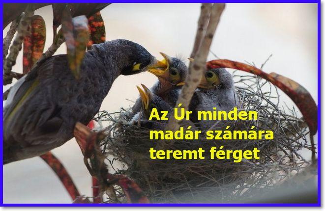 jó gyógymód minden féreg számára)