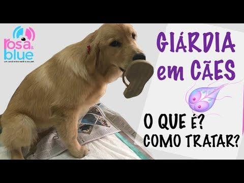 o que e giardia em cachorro széles spektrumú féreg elleni szer