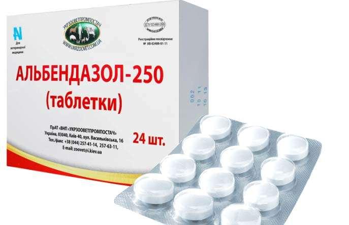 parazita tabletták az emberben