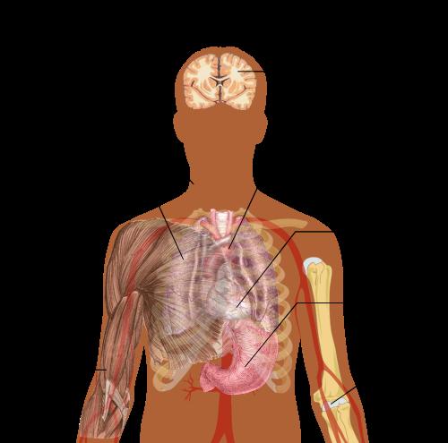 paraziták az emberi lép tünetei és kezelése