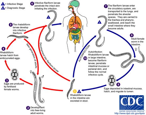 fascioliasis diagnosztizálása és megelőzése