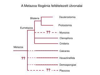 diphyllobothriasis terápia