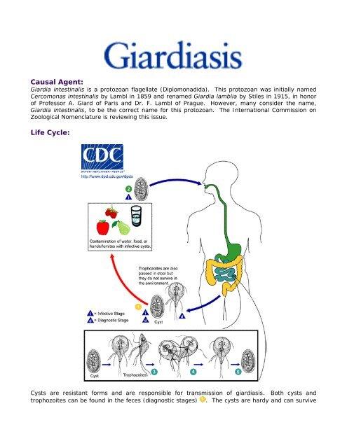 giardiasis ultrahang