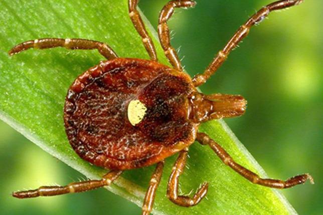 paraziták kezelése Karagandában)