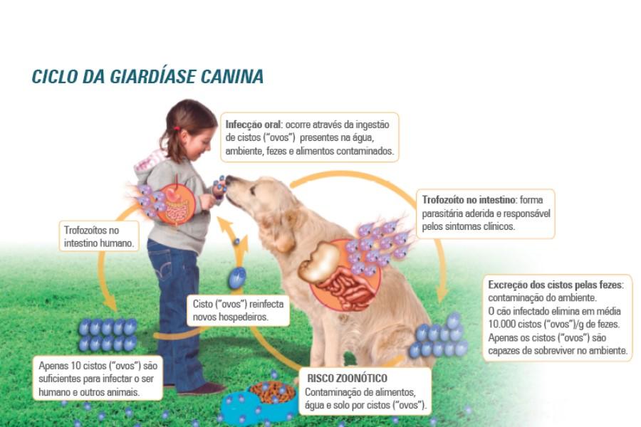 giardia sintomas portugues)