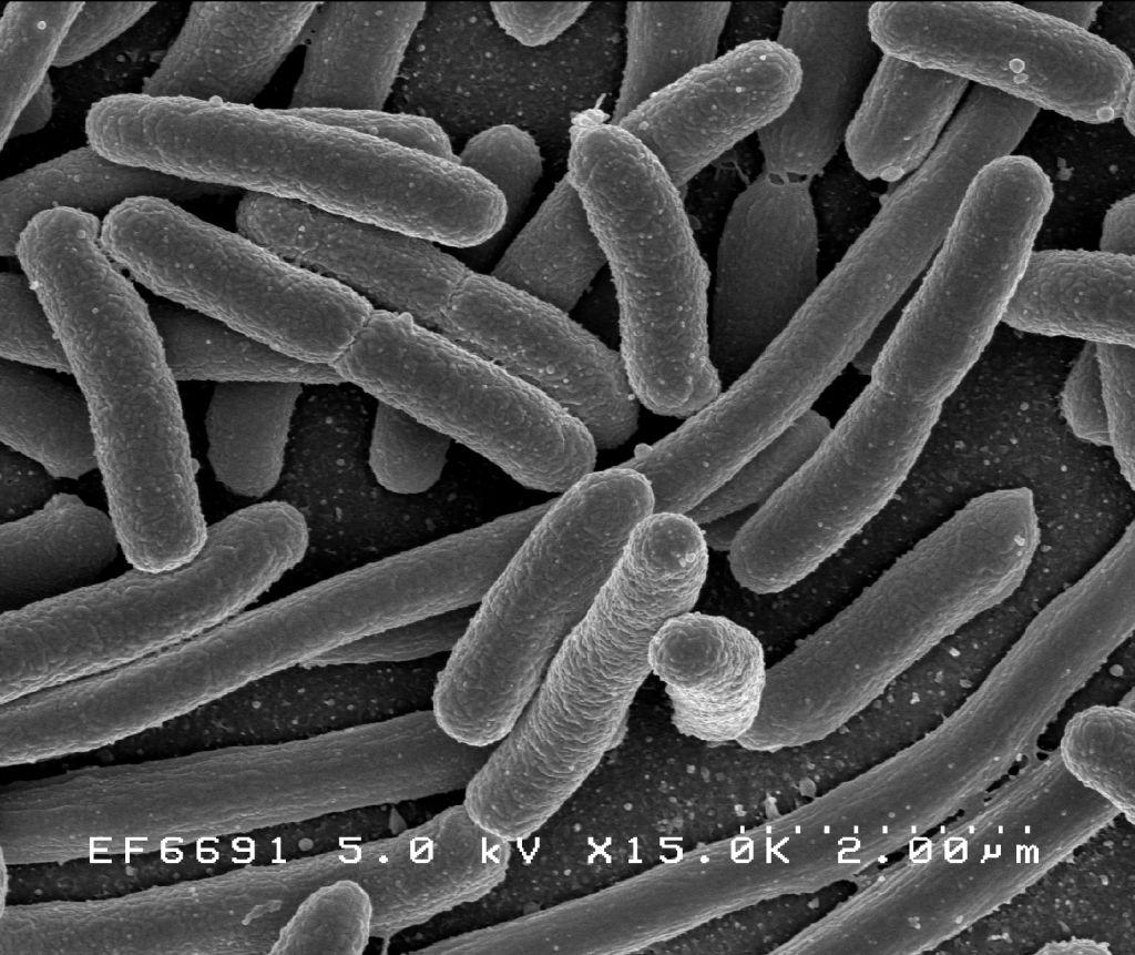 baktériumok paraziták