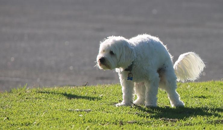 wat is giardia bij honden)