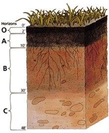 különbség a fonálférgek és a platyhelminták között