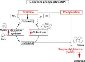 ornitin- ammónia paraziták gyógynövény a körféreg és a gyógyszer