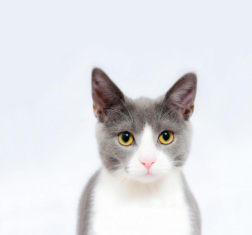 giardia pisici)
