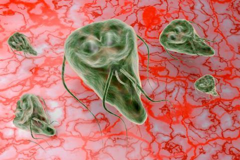 bacteria giardia que es)