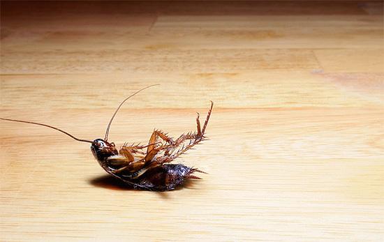 helmint ételszennyezés)