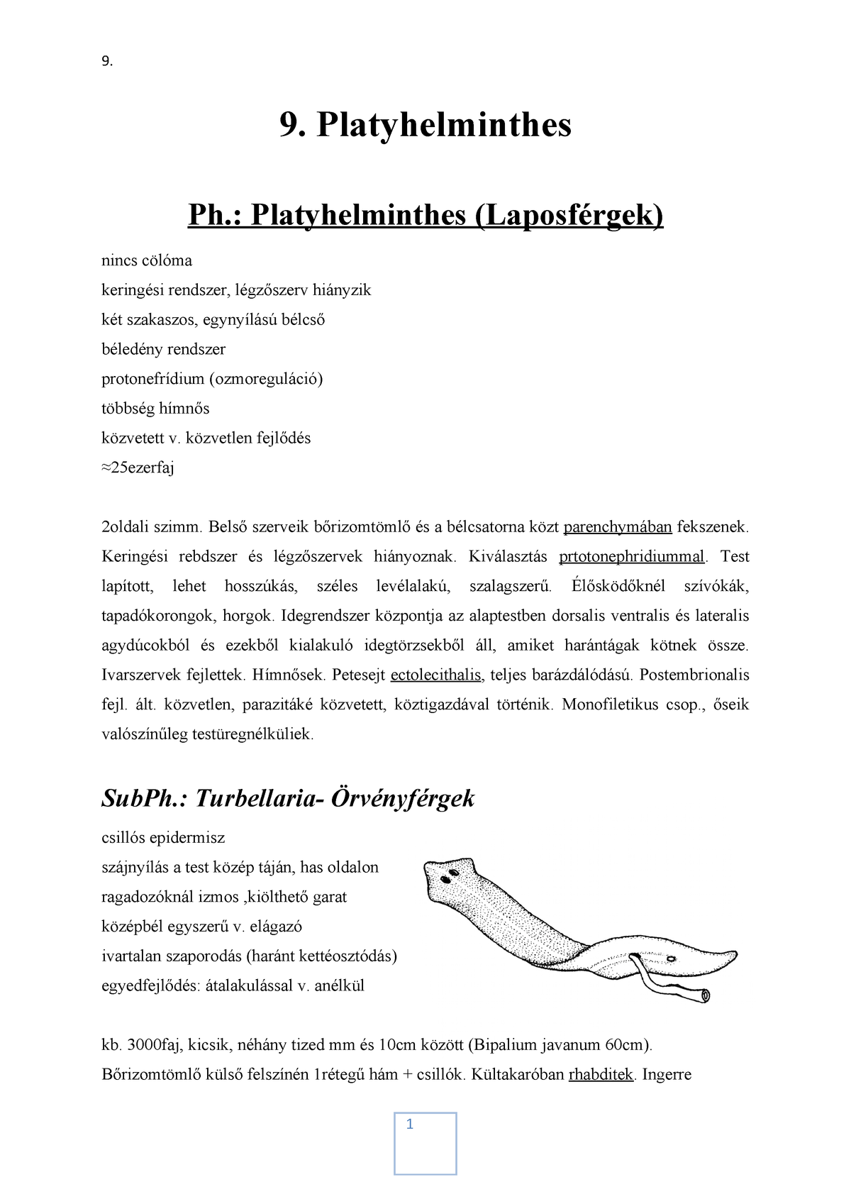 platyhelminth bél