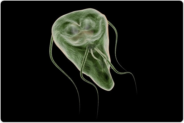 giardia treatment when pregnant