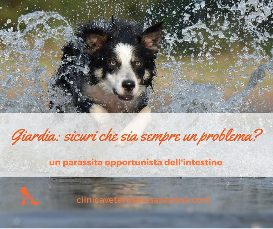 giardia cane forum)