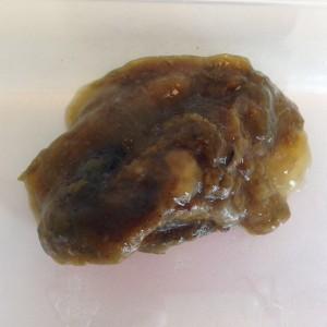 aschelminth jellemzői férgek megelőző kezelése emberben