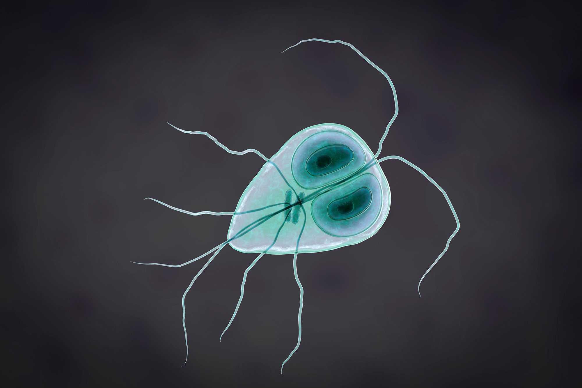 a fokhagyma megöli a parazitákat?