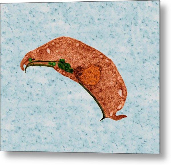 giardia zoonotic disease