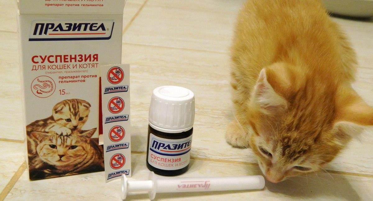 milyen gyógyszerek vannak férgeknek a férgek számára)