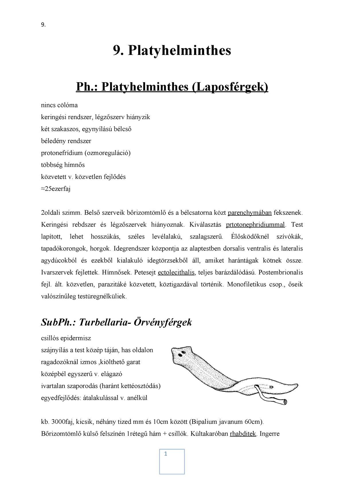 platyhelminthes idegrendszer