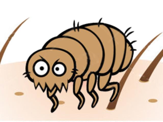 mikroszkopikus bőr paraziták