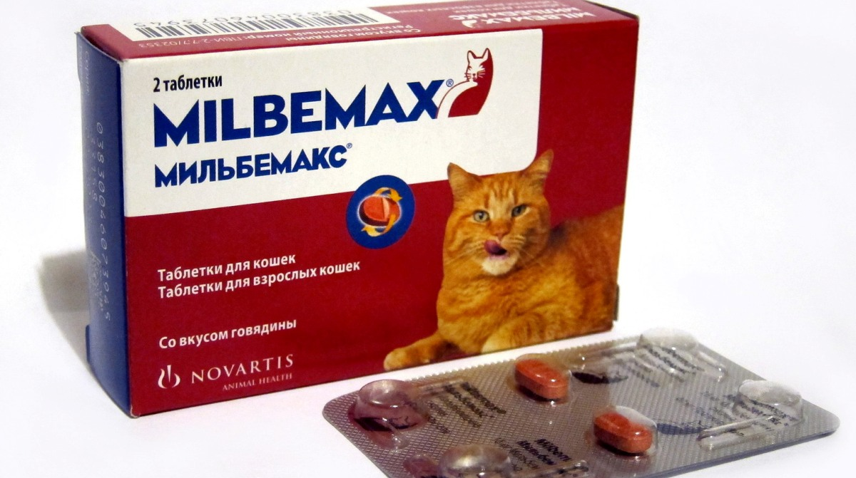 kezelés helminták felnőttek gyógyszerek)
