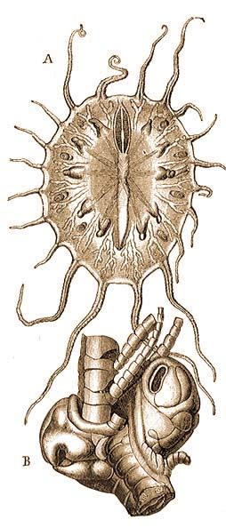 A földigiliszták lélegzete. Rovarok légzőrendszere - sáskák