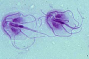 Welcome to mit esznek a parazitákból