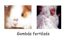 I. OSZTÁLY: FONÁLFÉRGEK (NEMATODA RUD.) | Brehm: Állatok világa | Kézikönyvtár