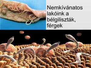 típusú paraziták férgek)