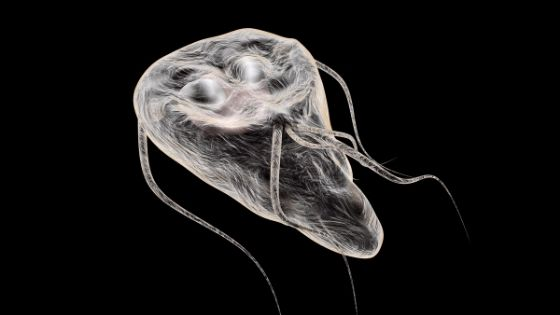 giardia doctor uk