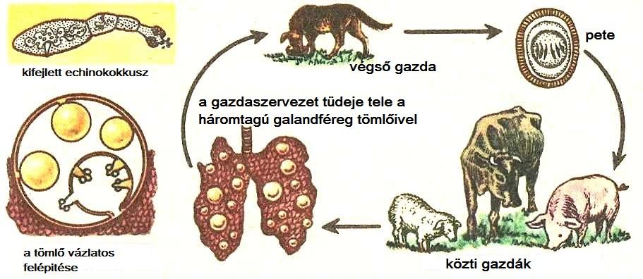 paraziták az állatok belsejében)