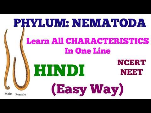 phylum Nematoda - fonálférgek