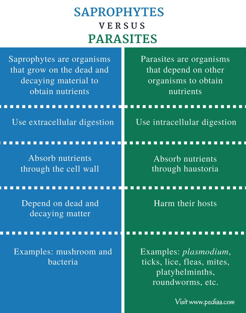 gombák paraziták szaprofitok)