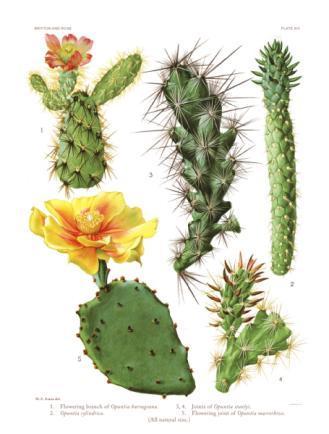 kaktuszok és paraziták kezelése)