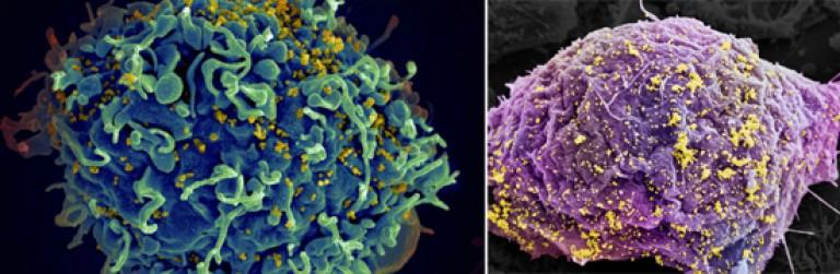helmintikus fertőzések a székletben tablettákkal tisztítsa meg a paraziták testét
