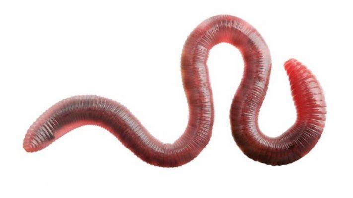 Oxyuriasis